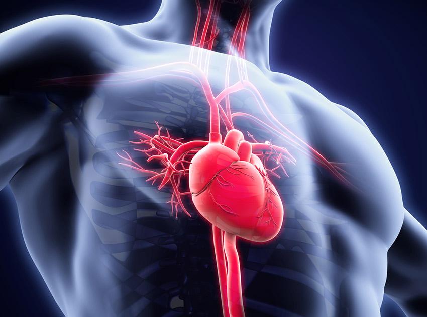 metanabol serce