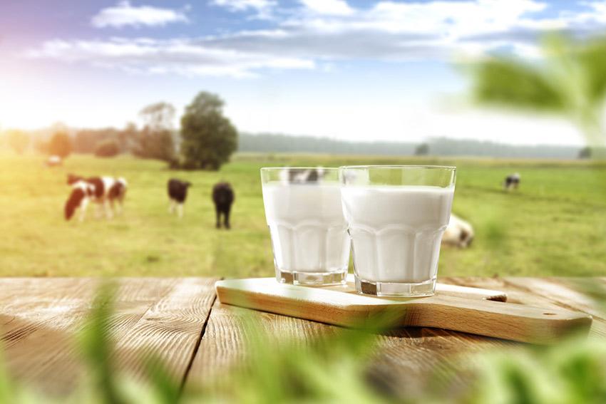 mleko tłuste