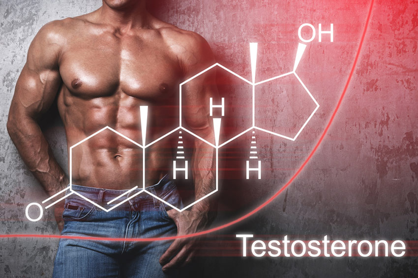 wysoki testosteron
