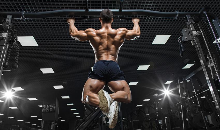 mięśnie grzbietu