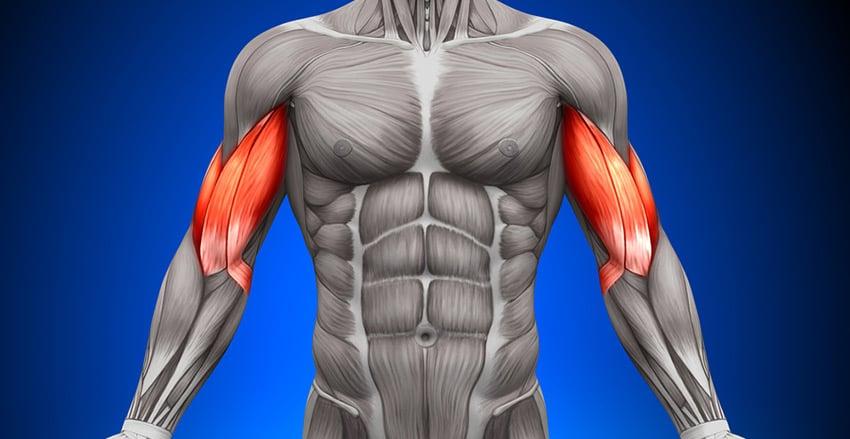 biceps hantle sztanga