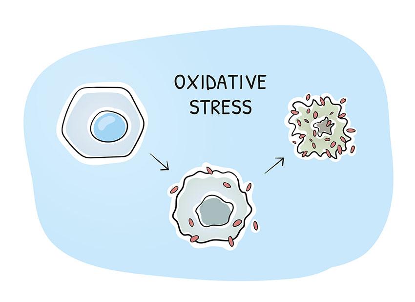 stres oksydacyjny