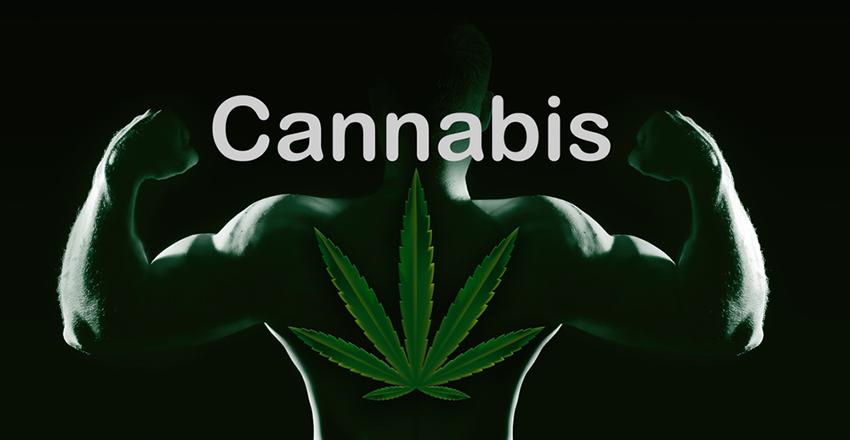 marihuana sportowiec