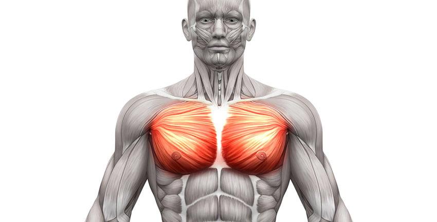 mięśnie piersiowe