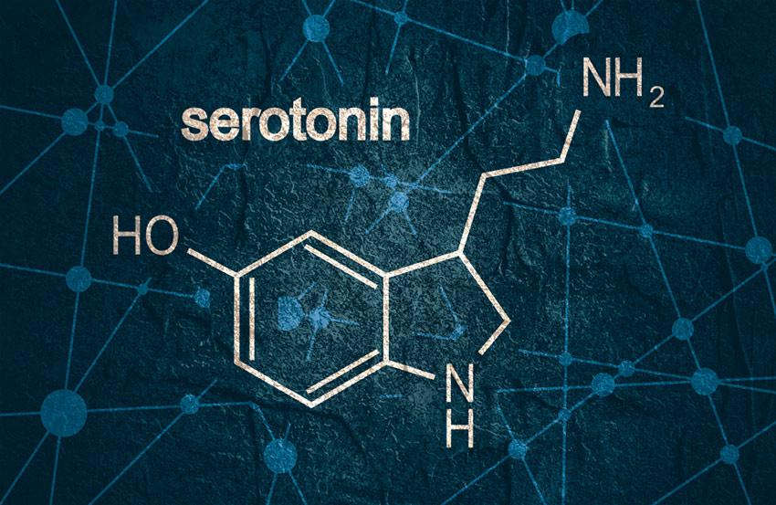 serotonina jak działa