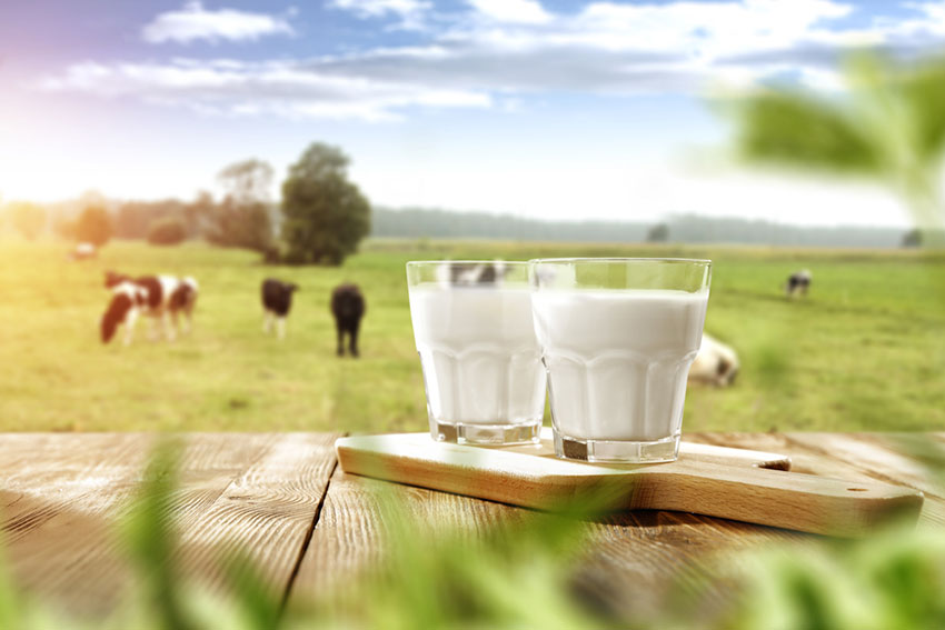 mleko w diecie