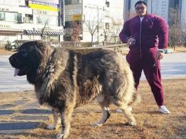 Koreański Hulk