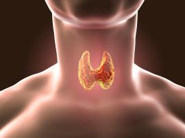 Tarczyca reguluje wzrost mięśni i redukcję tłuszczu?