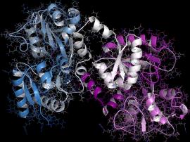 Laktoferyna - czym jest? Jej wpływ na odporność organizmu, bakterie i wirusy