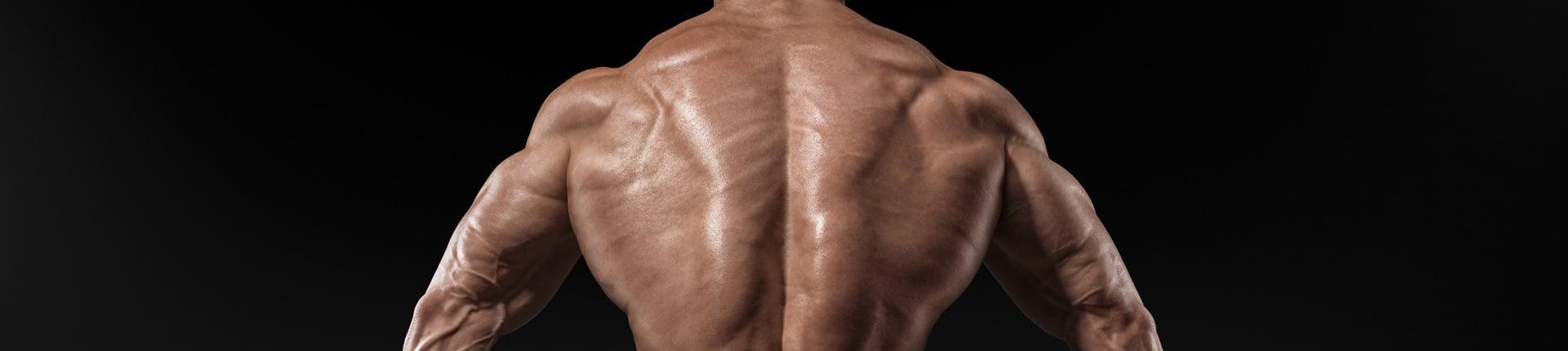Duże i silne mięśnie grzbietu, czyli trzeba mieć plecy!