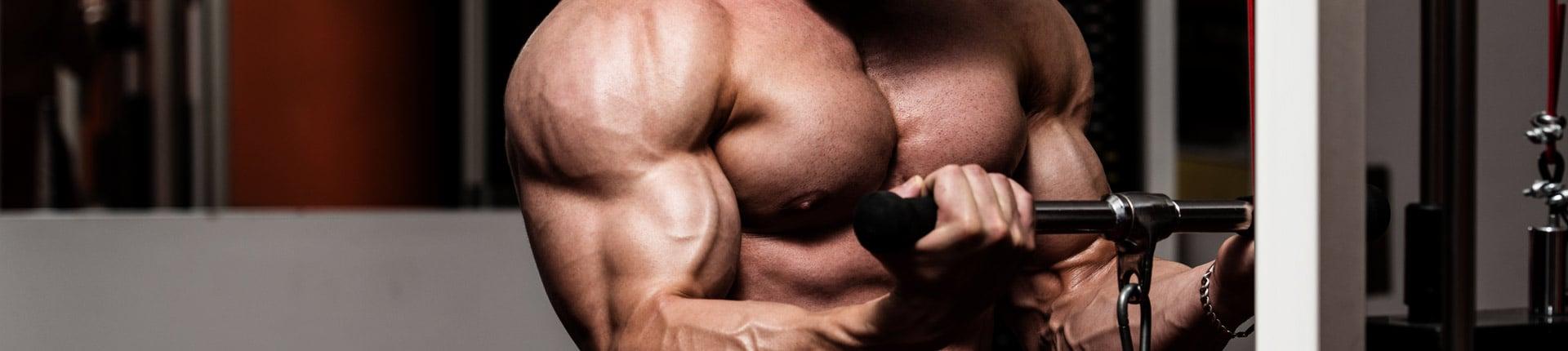 Warsztat: biceps i triceps HIPERTROFIA ramion!
