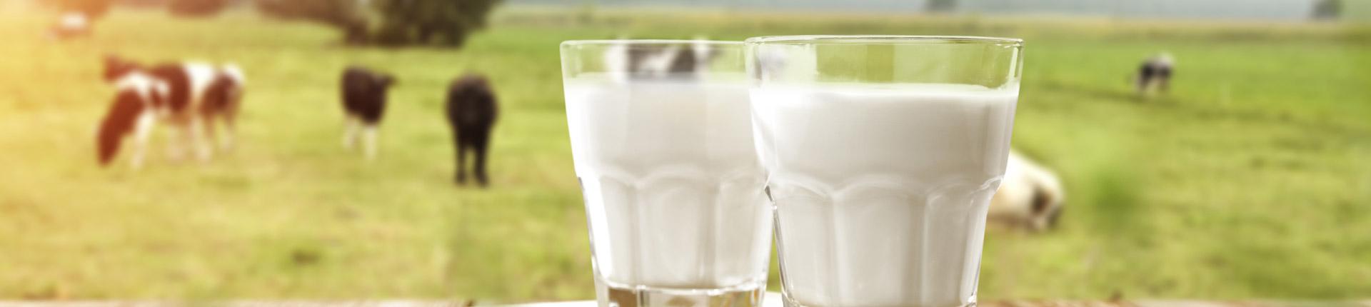 Antybiotyki i hormony w mleku. Czy mleko ekologiczne jest zdrowsze?