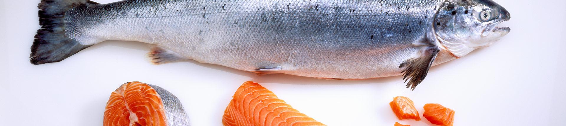 Co powinieneś wiedzieć o łososiu hodowlanym?