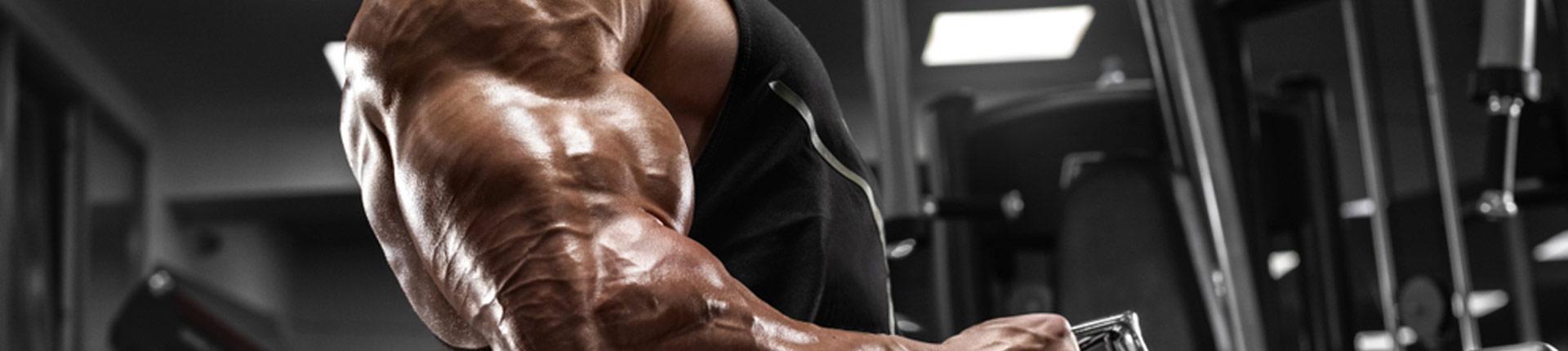 Czy zwiększanie ilości włókien mięśniowych jest możliwe?