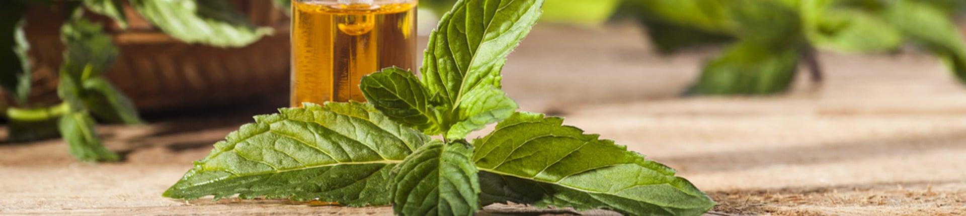 Pulegon: rakotwórczy składnik olejku z mięty?