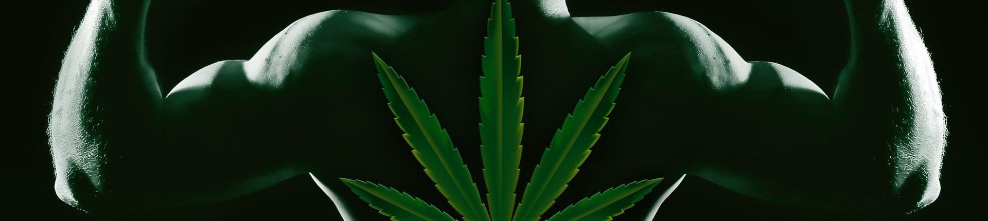 Marihuana w sporcie: korzyści i zagrożenia, wpływ na zdrowie