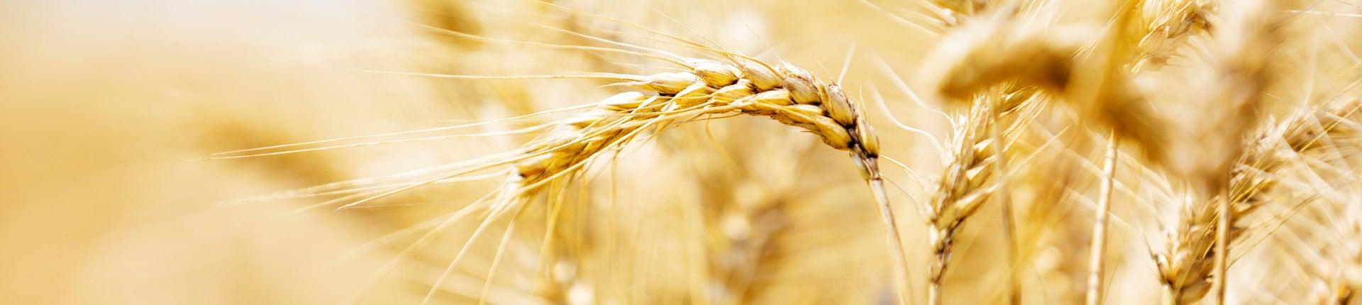 Naturalne toksyny w jedzeniu: rtęć i selen