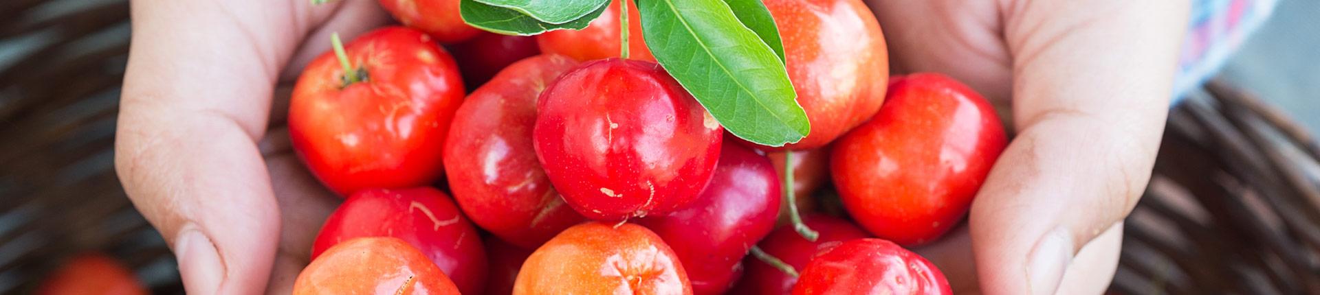 Acerola - co to za owoc? Ciekawe właściwości aceroli