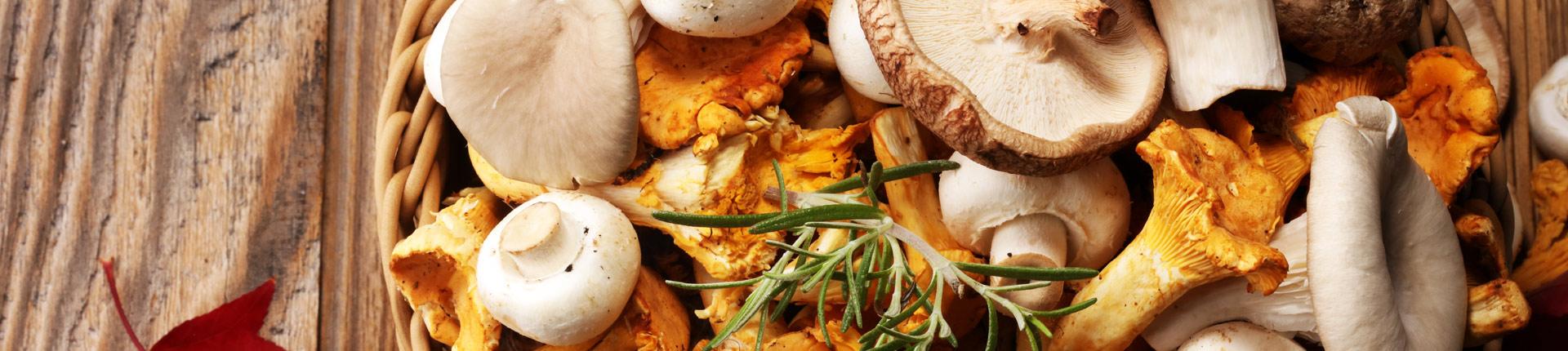 Grzyby niedocenione źródło pokarmowe?