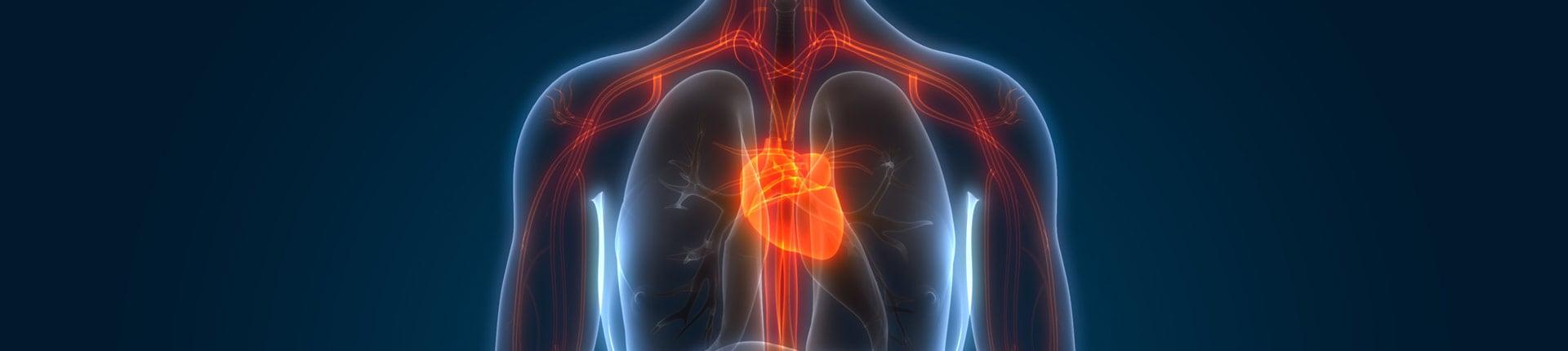 Genetycznie uwarunkowane choroby układu krążenia a trening