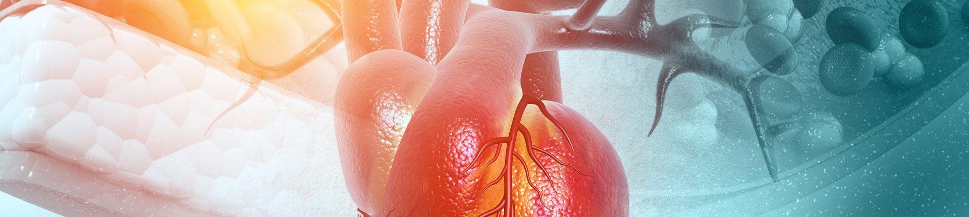 Niskie stężenie estradiolu związane z chorobą wieńcową u mężczyzn