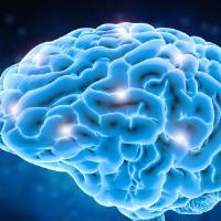 Kreatyna wspomaga mózg i układ kostny